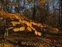 Kontrast podzimem zbarvených a slunečními paprsky zalitých bukových listů oproti lesnímu stínu.
