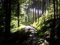 Sluncem zalitá lesní cesta po dešti.