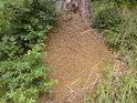 Občas tu narazíme na osamělé mraveniště.