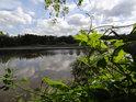 Na březích rybníka Farář roste mimo jiné také chmel, ale ten se potřebuje plazit po vyšších keřích a stromech, jinak moc neprospívá.