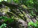 Pobřežní kámen u rybníka Farář je porostlý mechem.