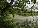 Rybník Farář je na žabinec poměrně bohatý.