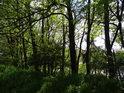Okraj stromových porostů ve východní části rybníka Farář.