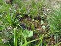 Maličkatá tůňka uprostřed louky, které trvání závisí na okolním mokru.