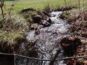 Horský potůček přitéká z Filipovické louky do lesa.