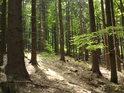 Tak nějak by se dat prezentovat vyvážený smíšený les.
