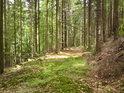 Nepříliš používaná lesní cesta zarůstá mechem a jetelem.