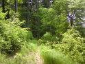 V některých úsecích je lesní pěšina téměř rovinatého rázu, přestože kolem je to samý prudký kopec.