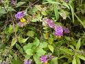 Fádní prostředí tohoto místa dokážou květiny aspoň malinko oživit.