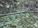 Planá jablka spíše dokreslují zapomenutost a opuštěnost místa.