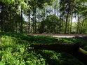 Za uštípnutou větví a železniční tratí Chrudim – Moravany ještě pokračuje chráněné území Habrov.