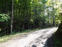 Zpevněná lesní cesta na jižní hranici chráněného území.