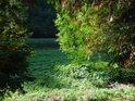 Prosluněné koryto Jedovnického potoka s malou levobřežní nivou a lesní silnicí v pozadí.