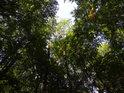 Habrůvecká bučina za nastupujícího podzimu.