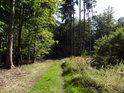 Lesní cesta v nejvyšších místech chráněného území v jeho severní části.
