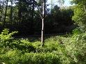 Zarůstající mýtina nedaleko zřetelné lesní cesty.