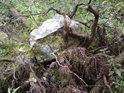 Že by šlo o hadec kořeny vytlačený na povrch zemský...