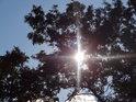 Slunce proráží svými paprsky dubové listy.