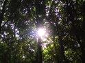 Slunce jako by prosvítilo svou nesmírnou silou polovinu kmene buku.