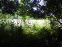 Průhled z tmavého lesa na osvětlené prostranství.