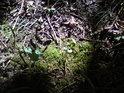 Mech s mladým doubkem na krátce osvětleném místečku v lese.