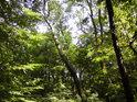 Lesní klid za horkého letního dne.