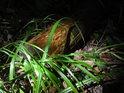 Téměř bodově osvětlený špalek v jinak temném lese.