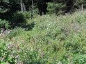 Za hustými porosty převážně s netýkavkou teprve začíná les.