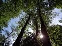 Je dobré se před prudkým lužním Sluncem skrýt pod listy stromů.