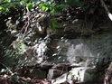 Břečťan si hledá místo i ve skalách, ale lépe se mu daří při parazitování na stromech.