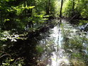 Pravobřežní slepé rameno Tiché Orlice by s koncem léta mohlo být zanesené od řas, ale voda je v něm kupodivu průzračná.