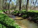 Heraltický potok si cestu malým luhem dokáže vždycky prorazit.