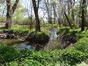 Zajímavý meandr Heraltického potoka.