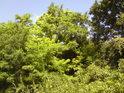 Zeleň tu nabývá různých odstínů.