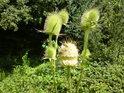 Je zajímavé pozorovat včely na květech.