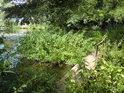 Mostek přes potok, který ústí do velké tůně.