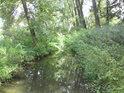 Potok, který teče přes chráněné území.