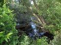 Polozapomenutý cíp jezera Kašpárkovo.