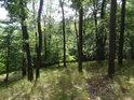 Lesní svah s lesní travou.