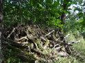 Hromada dubového dříví, poněkud tlejícího.