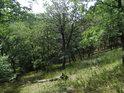 lesní prostor se jeví jaksi zmatený, tedy jde o dojem...