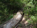 Padlý dubový kmen se slunečním flekem.