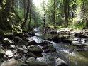 Na pravém břehu Křemžského potoka má lesní stráň prudký spád.