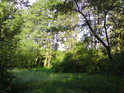 Jen stěží prostupné houští tvoří okolí potoka Hořina.