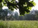 Letní louka z pod Sluncem zalitým dubovým listím.