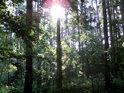 Ranní Slunce je kouzelník nejen v lese.