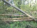 Tolik dřeva padlo jedním směrem.
