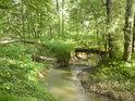 Padlý jasan tvoří přirozený most přes Hořinu.