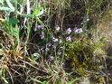Rozmanitá květena Hošťálky.