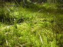 Úžasná zeleň mokrého mechu.